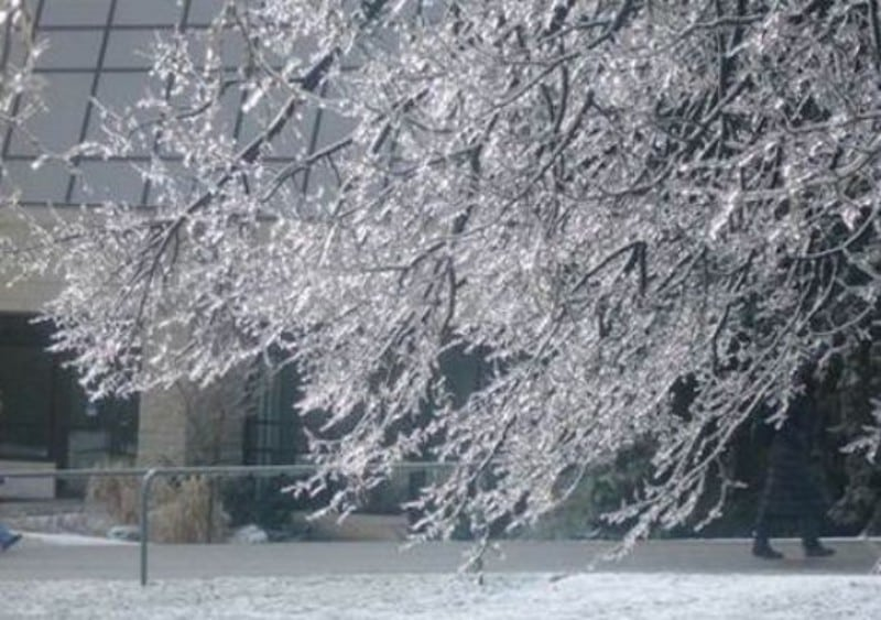 Chuva congelada