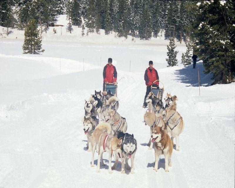 Passeio com Huskies