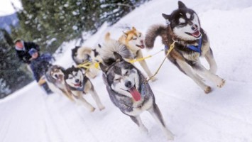 dog-sledding-breckenridge